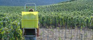 Aun hay 80 plazas disponibles para trabajar en la vendimia en Vaucluse, Francia